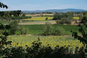 Belles Vignes