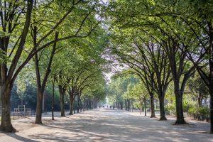 Avenue de Malakoff III